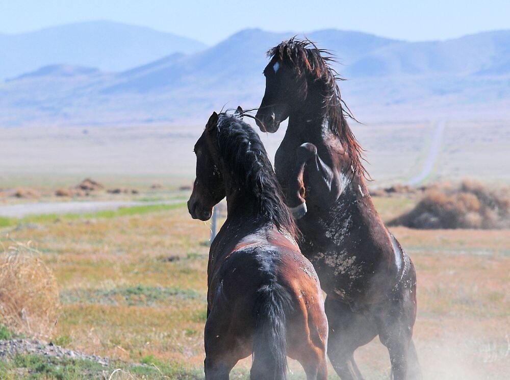 Pony Express-1 by Kelly Jay