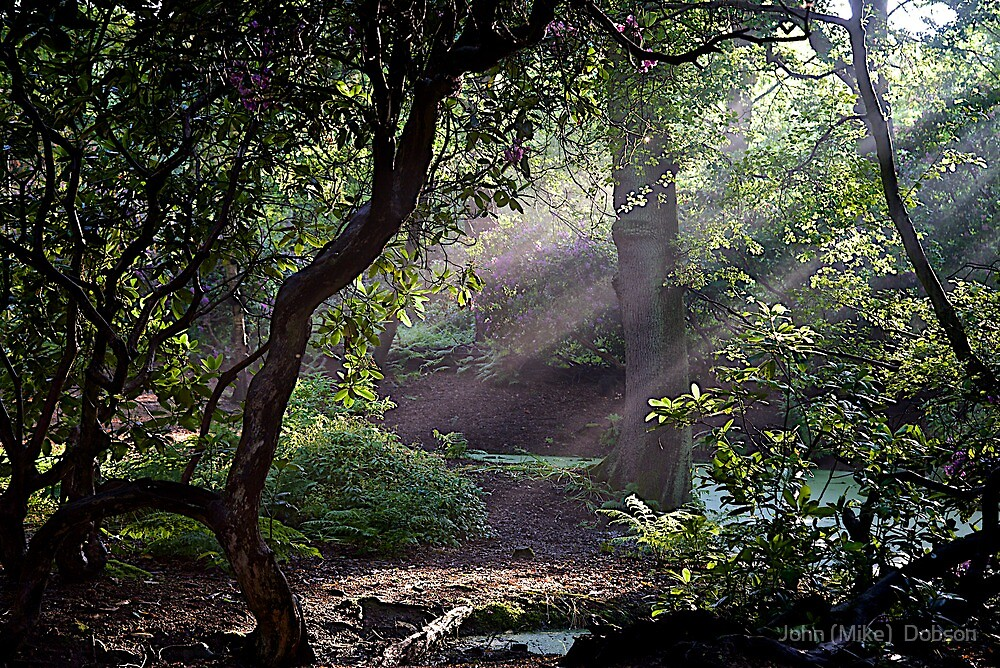 Shafts of Light by John (Mike)  Dobson