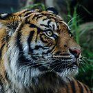 Hello Tiger I by Adam Le Good