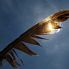 Magpie feather by turniptowers