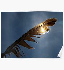 Magpie feather Poster