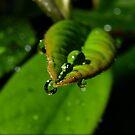Raindrops on leaf by turniptowers