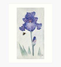 Blue Iris with Bee Art Print
