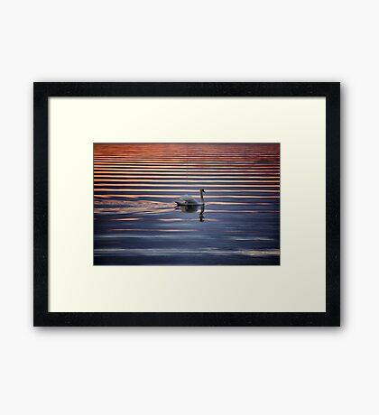 Swan Lake Abstract Framed Print