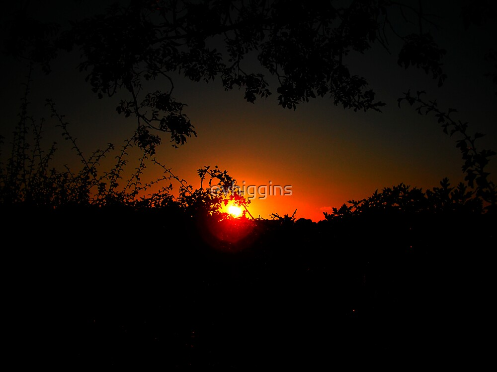 Summer Evening by evhiggins