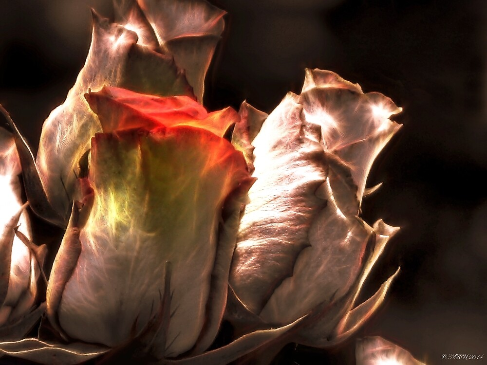 Roses and Light by Noble Upchurch