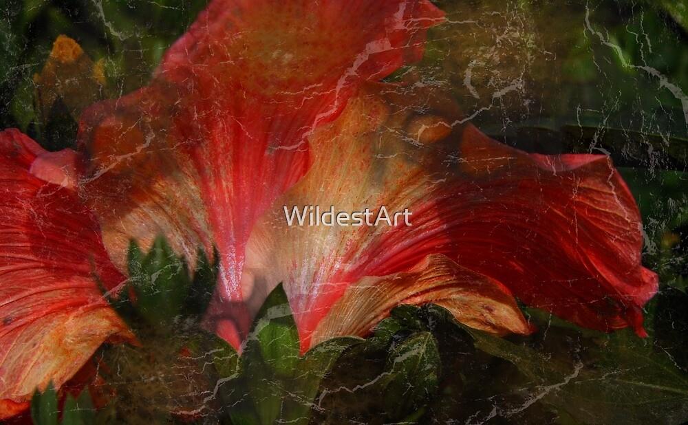 Hibiscus and Texture by WildestArt
