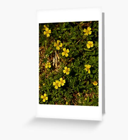 Tormentil in Shalwy Valley Greeting Card