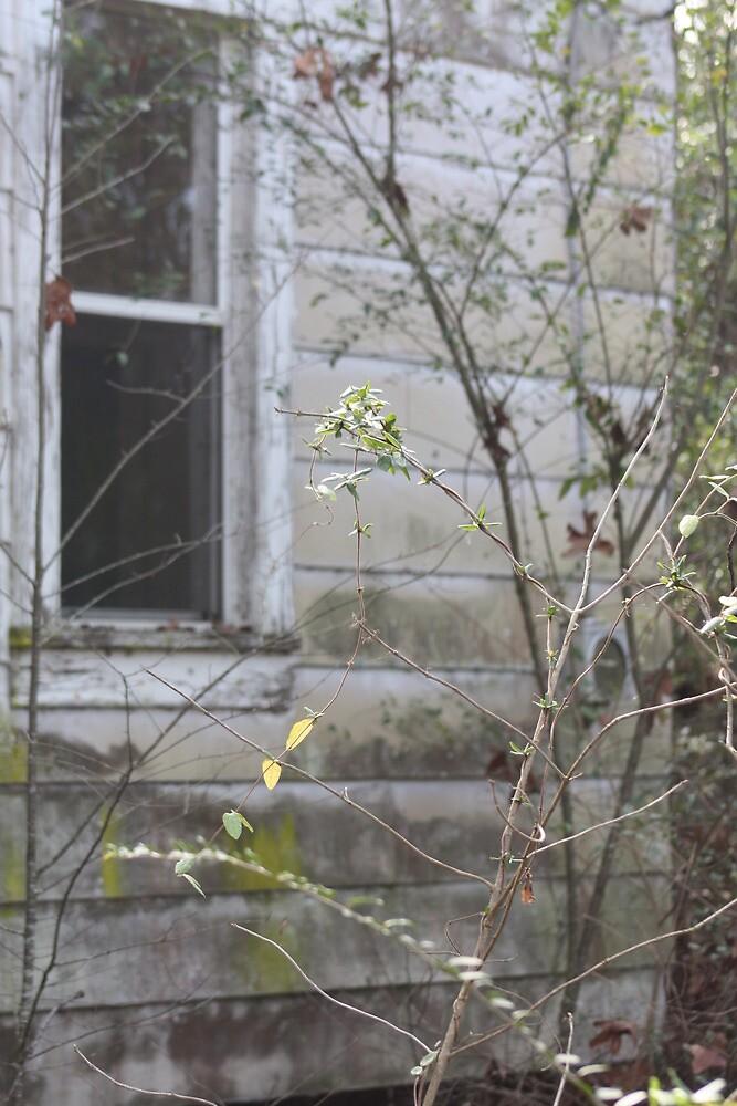 Country Window scene by wingsonafield