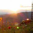 Sunset at Cedar Breaks No. 2 by halabilly