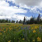 Wildflowers at Cedar Breaks No. 2 by halabilly