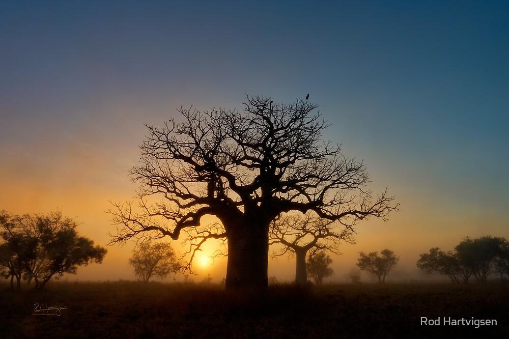 Misty sunrise Boab by Rod Hartvigsen