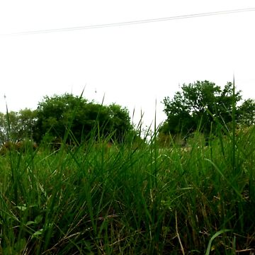 Grass field by LoveArt4Life