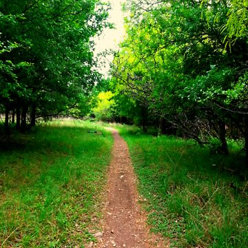 Beautiful pathway 1~ by LoveArt4Life