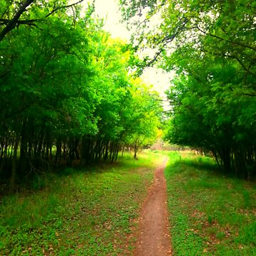 Beautiful pathway 2~ by LoveArt4Life