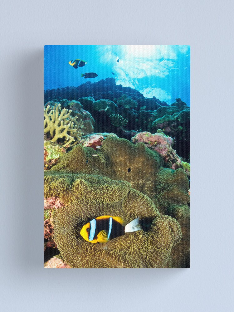 Alternate view of Anemonefish Canvas Print