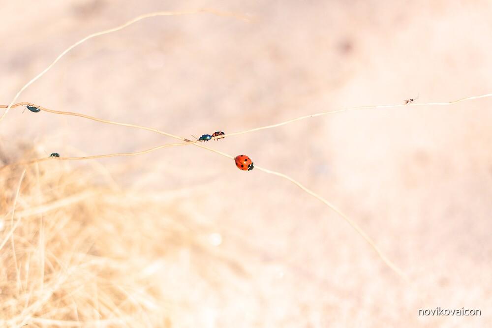 Busy beetles by novikovaicon