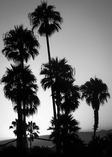 Hollywood Palm II by Marsstation