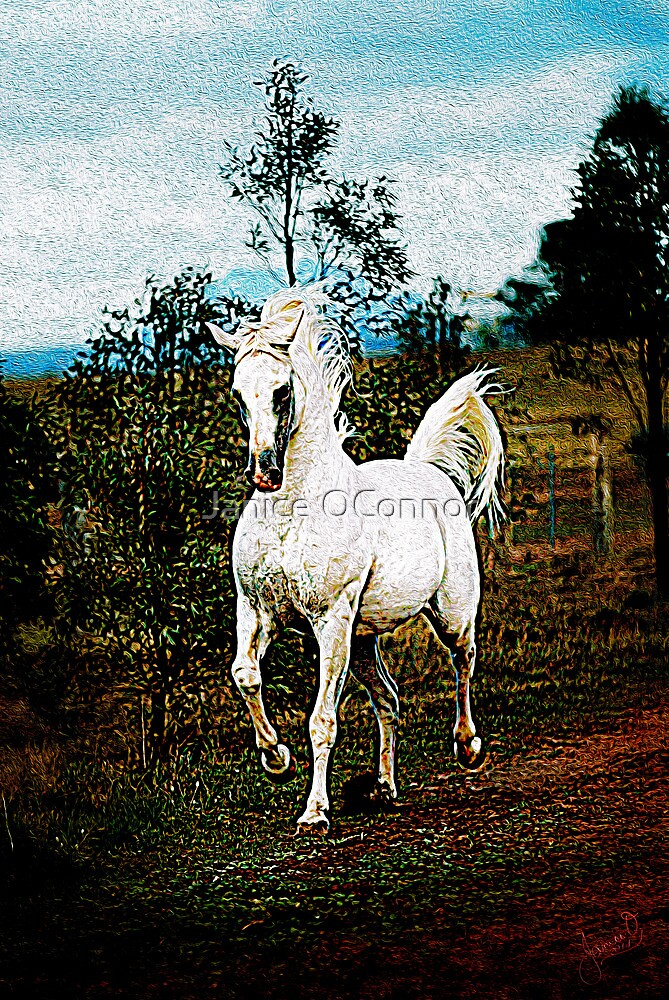 Gallop  by Janice O'Connor