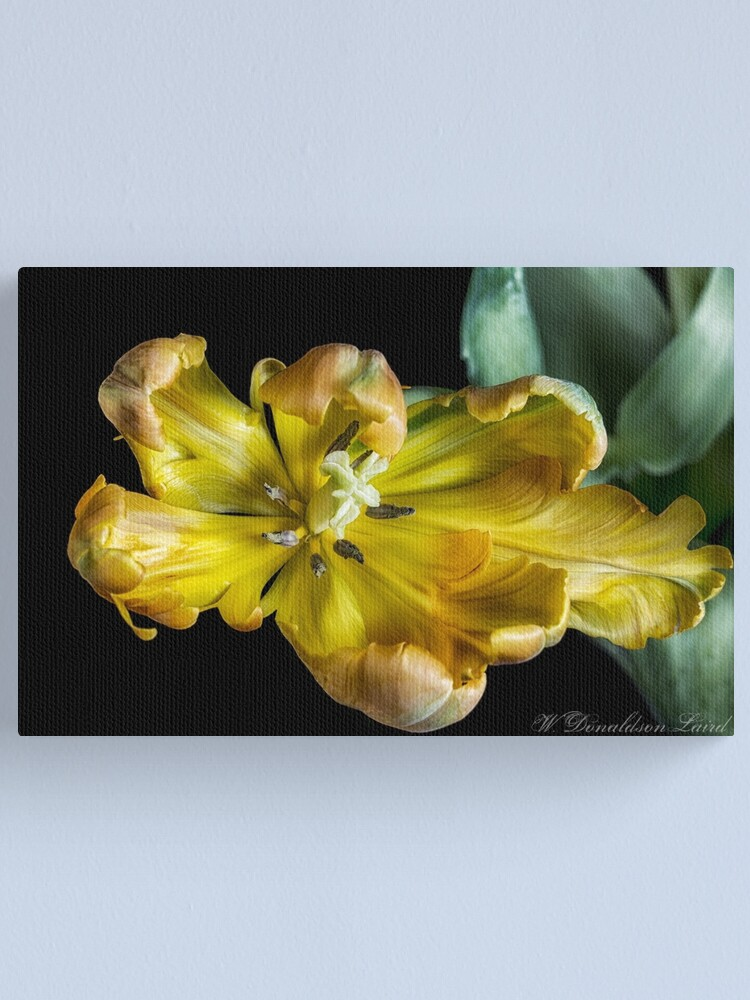 Alternate view of Mellow Yellow Canvas Print