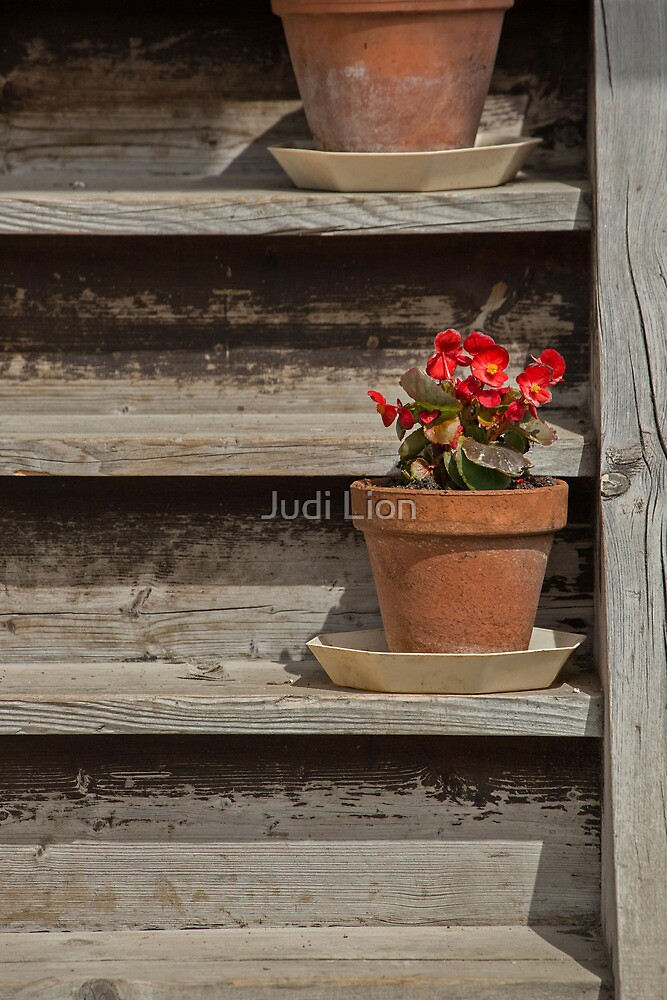 Flower pots on a wooden staircase by Judi Lion