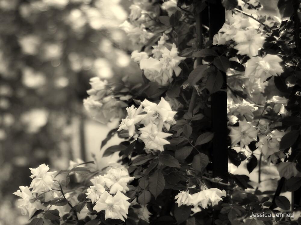 Dappled Roses by Jessica Jenney
