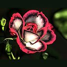 Rose Covered Pillow  by NewfieKeith