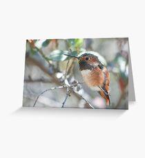 Allen's Hummingbird (Selasphorus sasin) Greeting Card