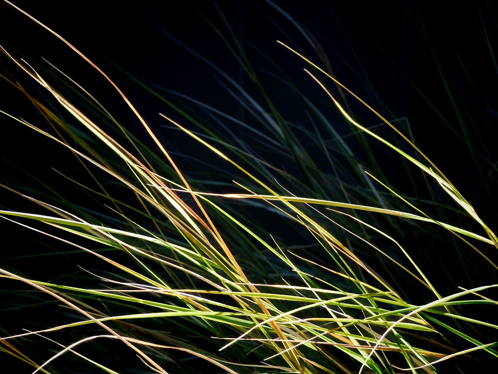 Blue Grass or Green  by PictureNZ
