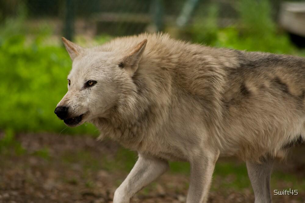 Patroling Wolf by Swift45