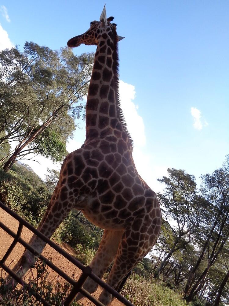 Kissing Giraffe by ericalongamore