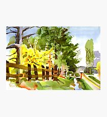Forsythia in Bloom in Watercolor Photographic Print