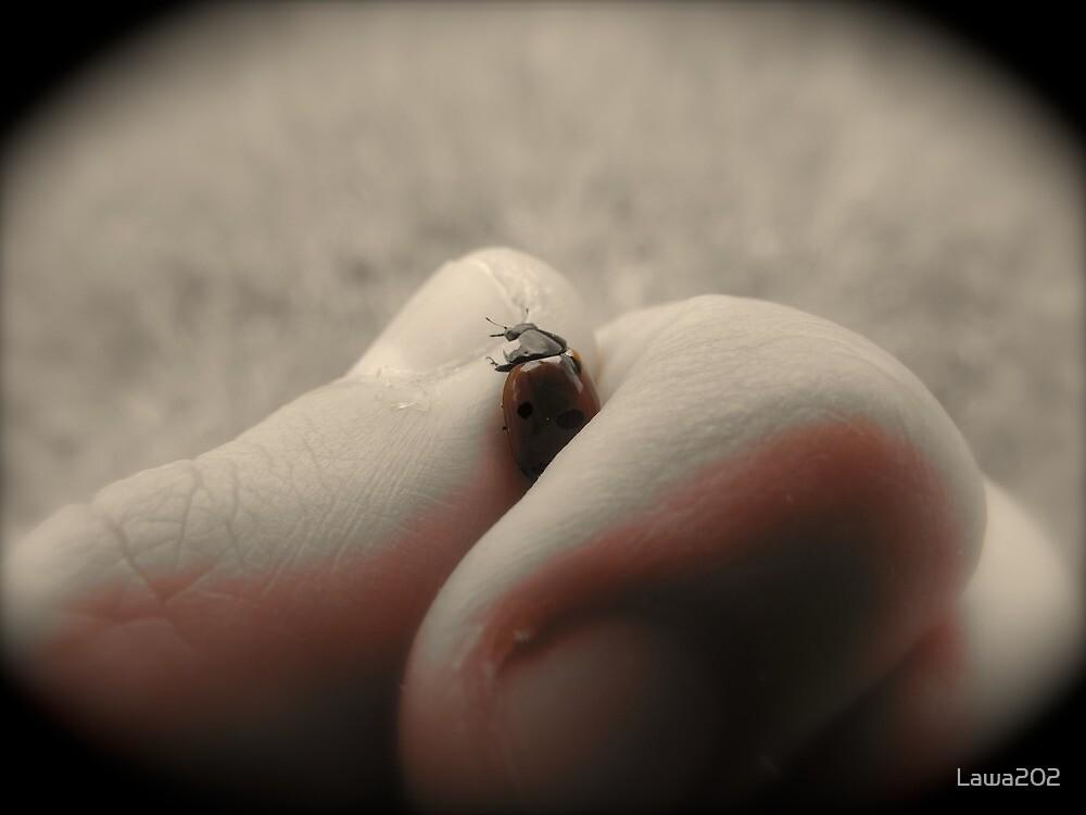 Ladybug by Lawa202