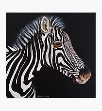 Zebra baby Fotodruck
