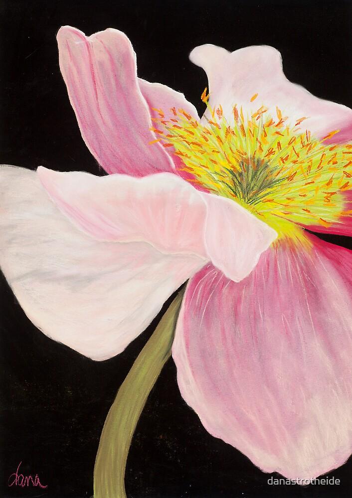 Pink Poppy by danastrotheide
