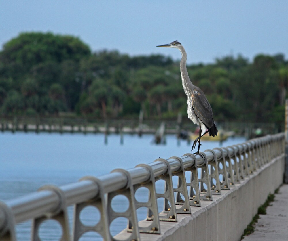 heron perch by cliffordc1