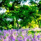 Lavender Grove - Tall by OzPhoto