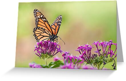 Winged Beauty by Tracy Riddell