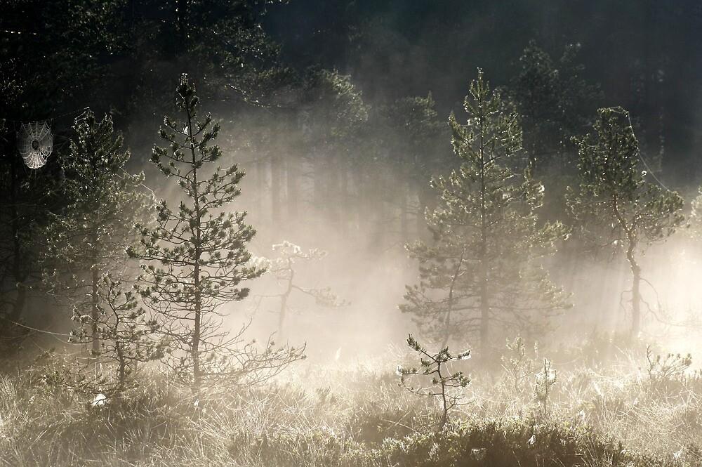 9.6.2014: Morning Mist Moment by Petri Volanen