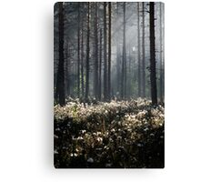 9.6.2014: Wild Rosemary Flowers in Forest Canvas Print