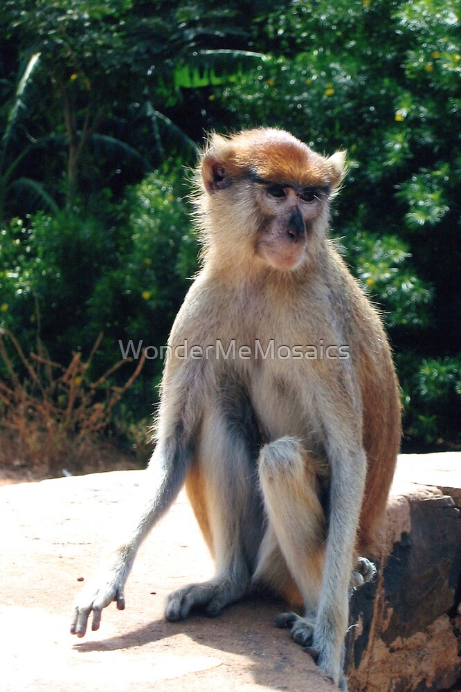 African monkey - Print by WonderMeMosaics