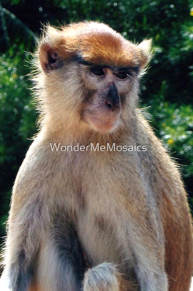 African monkey - Print by WonderMeMosaics