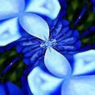 Blue Vortex by Scott Mitchell