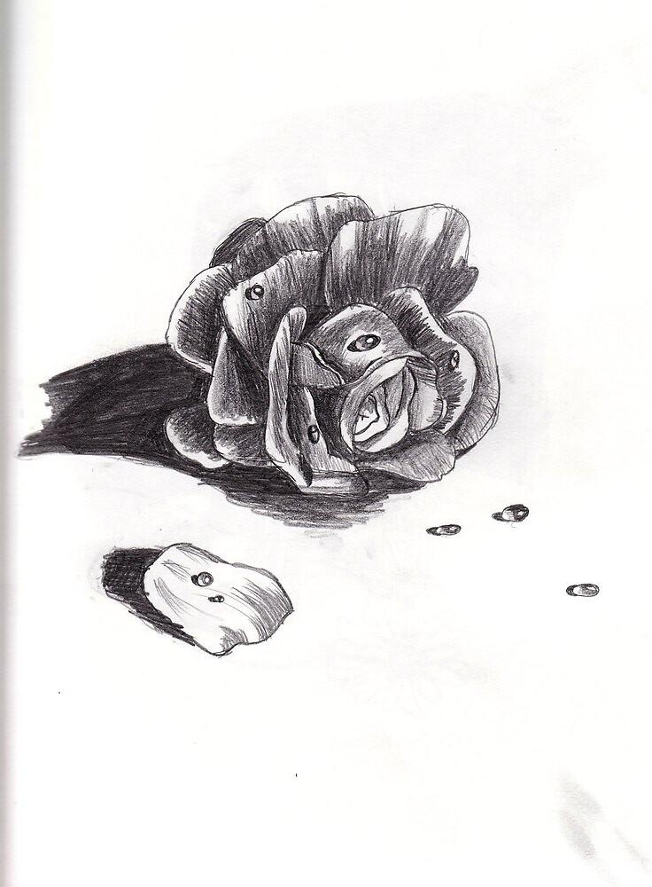 Wet Rose by Poshu