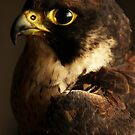 Portrait of a Falcon by Maartje de Nie