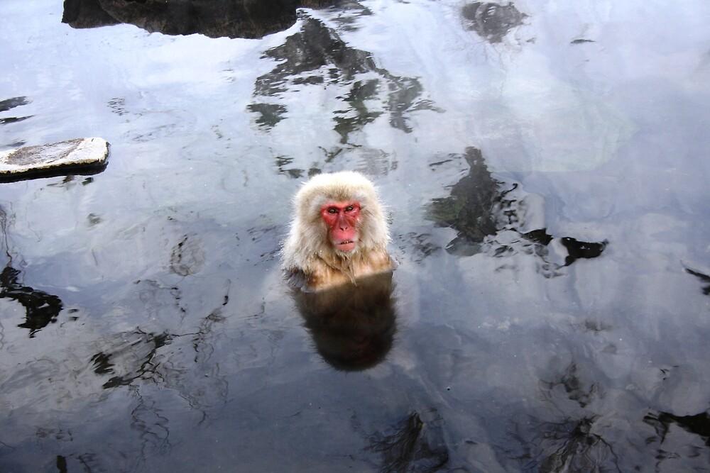 zen monkey by Kylie Epskamp