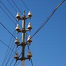 Telegraph Wires by John Dalkin