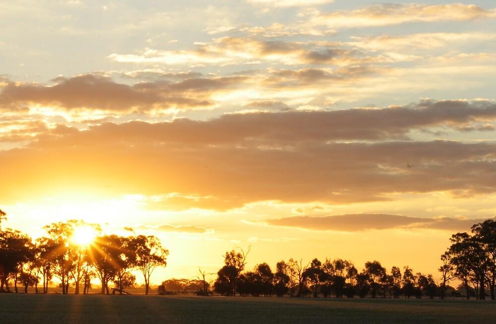 Golden Sunset by Kylie Epskamp