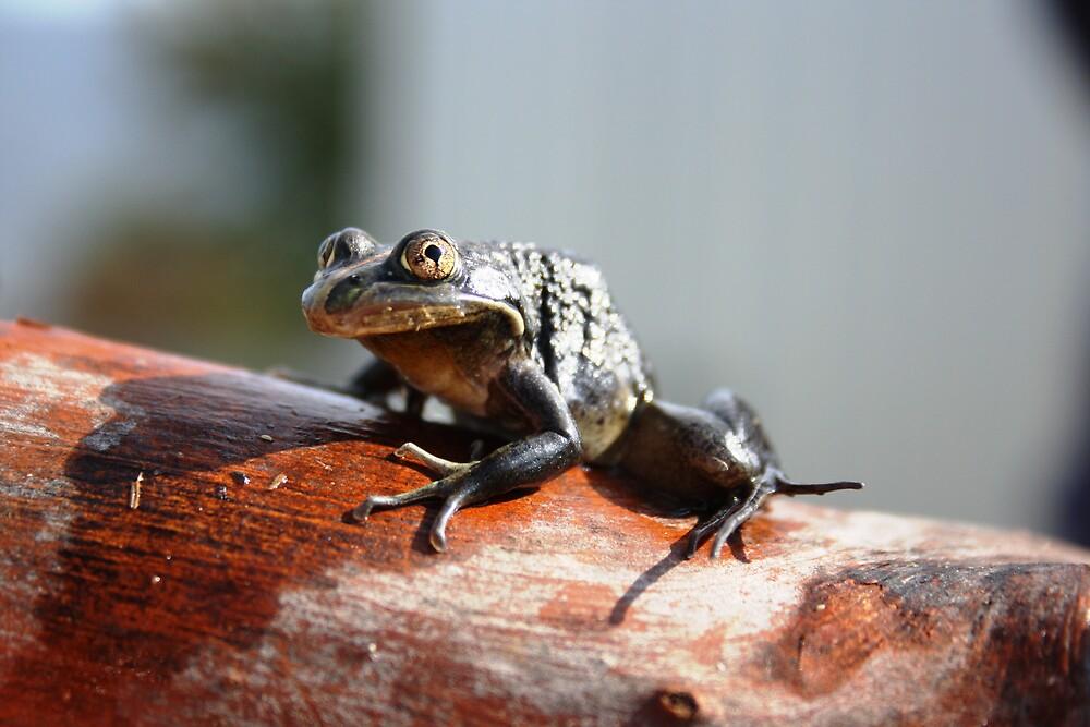 froggy! by Kylie Epskamp