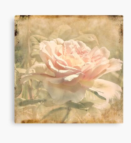 Secondhand Rose Canvas Print